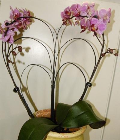 orkide hj