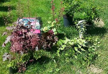 köpte växter