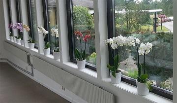 Orkideer V