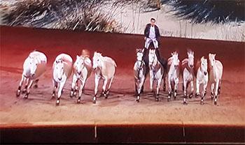10 hästar en ryttare