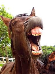 hästgarv