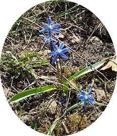 blomma - Kopia