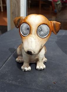 Hund - Kopia