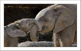 elefantmamma