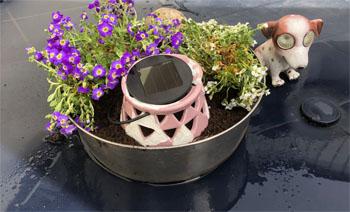 Blommor bord