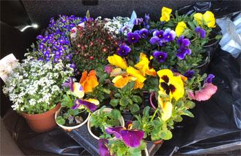 köpte blommor
